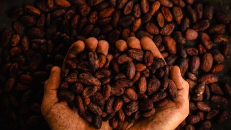 l'assaggio-del-cioccolato-pablo-merchan-montes-251879-unsplash